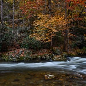 Autumn Flow In Square Format