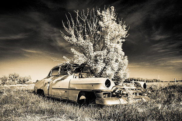 Old Car with Plant in the Hood  (TR1301)