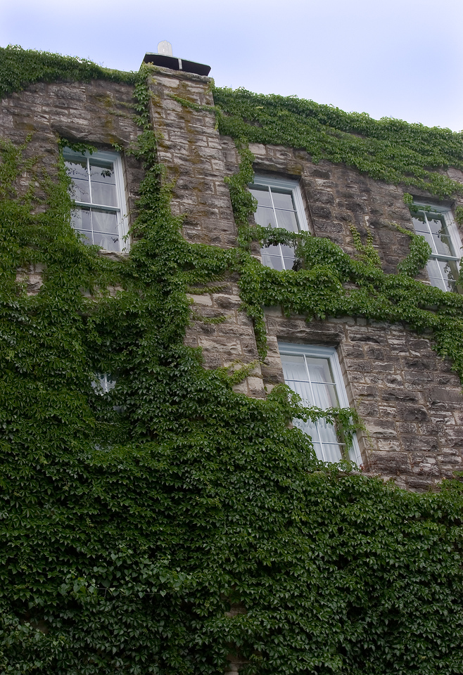 Close up of the wonderful ivy crawling up the walls of the 1888 Crescent Hotel & Spa