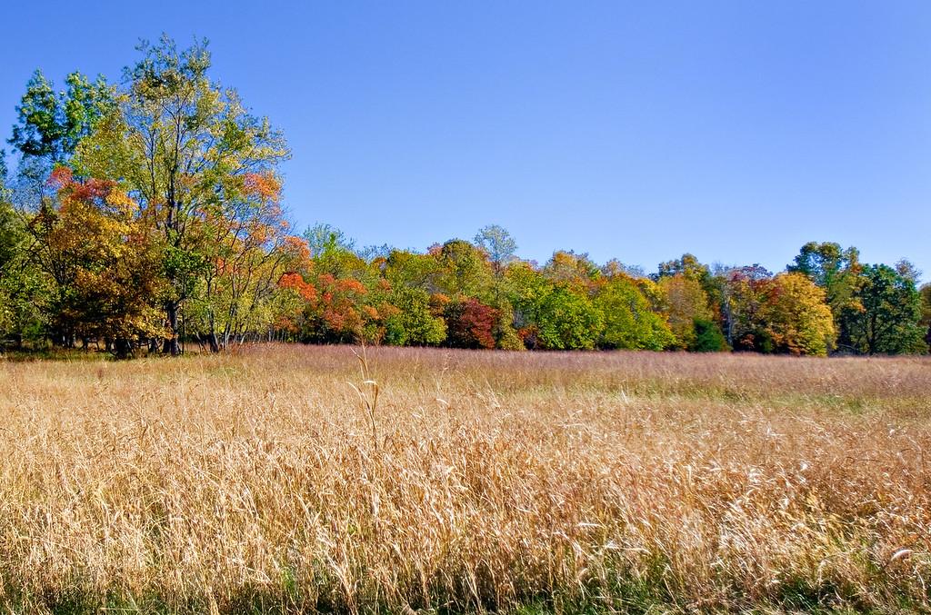 prairie of Pea Ridge