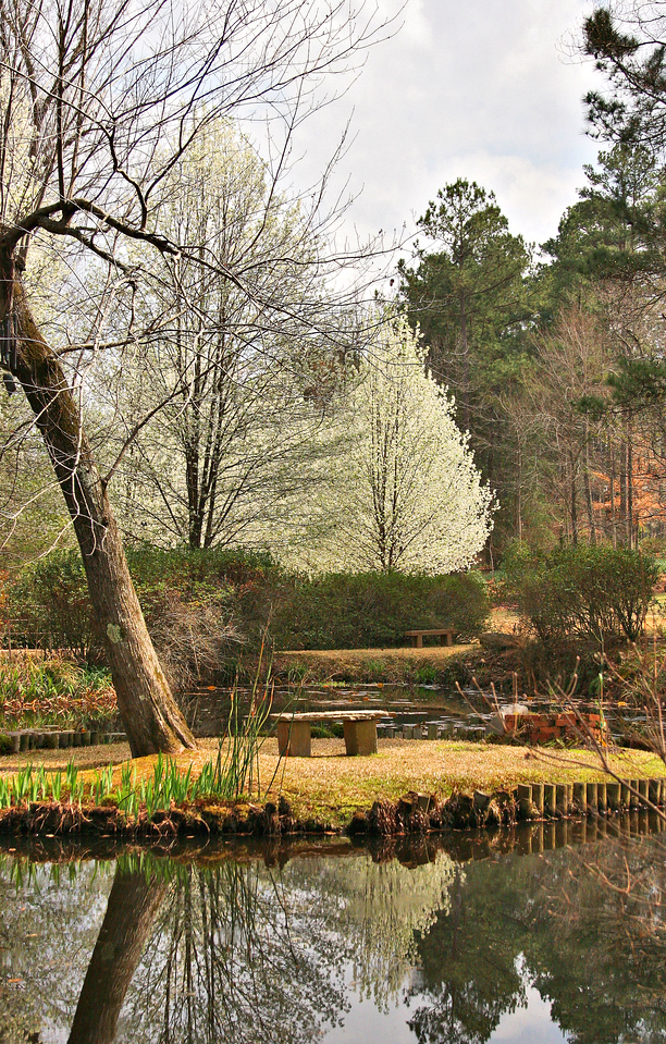 Camden Arkansas - daffodile festival<br /> The Daniel's Japanese Gardens in Camdem Arkansas
