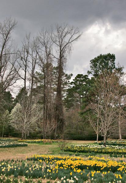 Camden Arkansas - daffodile festival