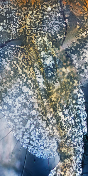 Amphipod limb