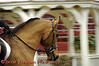 View 19: Arabian Horse in competition in the Empire Arabian Horse Spring Show in Syracuse, New York.