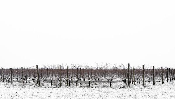 Snowy 13