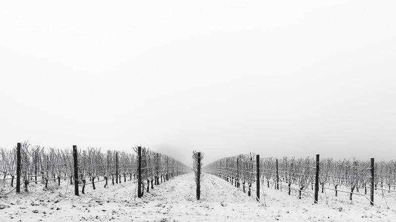 Snowy 8
