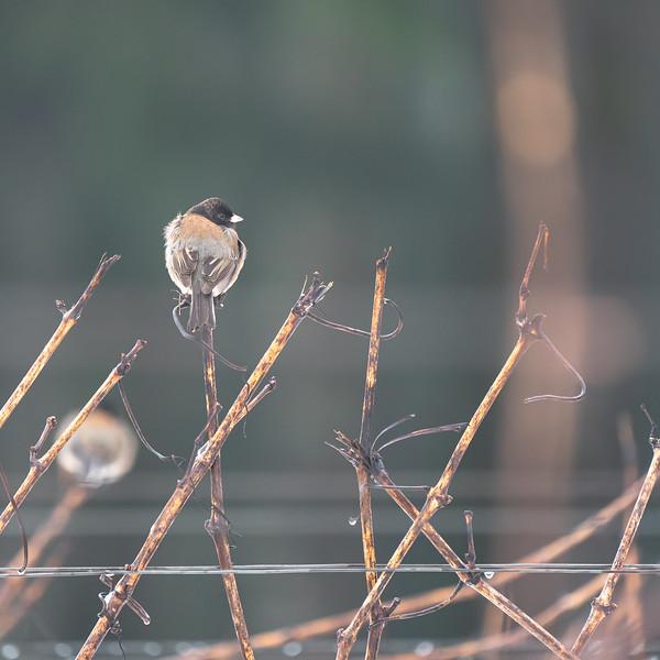 Bird On A Vine
