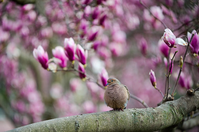 Moongate Garden -  Bird