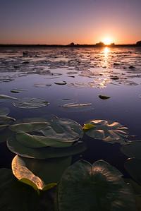 Rasarit in Delta Dunarii printre frunze de nufar