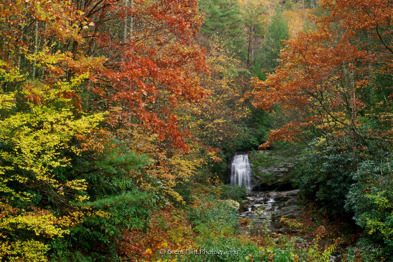 S.3133 - forest waterfall, Great Smoky Mountains National Park, TN.