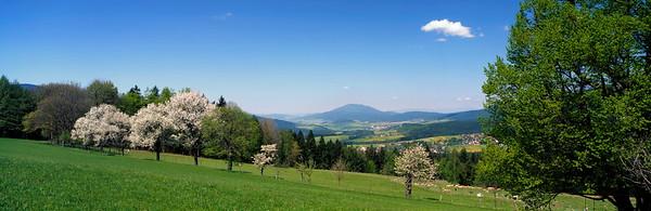 Flowering fruit trees on a meadow in Bavaria