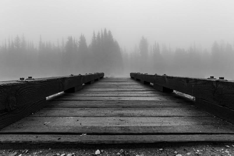 Misty Forest Bridge