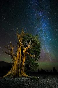 Galactic Sentinel