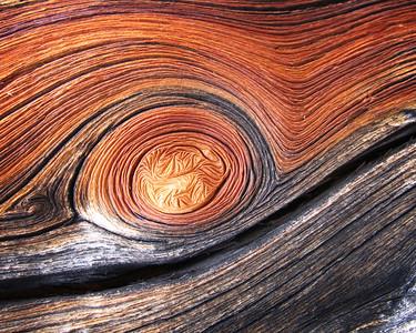 Whitebark Pine, Sawtooth Mountains, Idaho