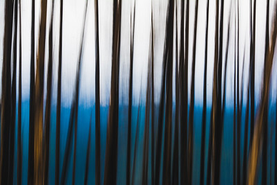Abstract Aspens 1