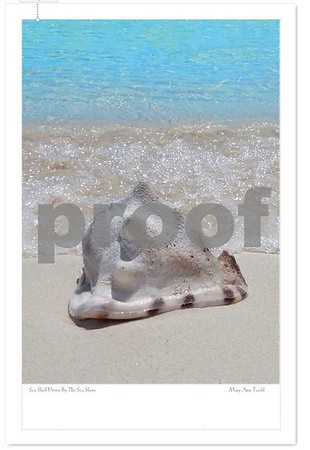 Sea Shell Down By The Sea Shore