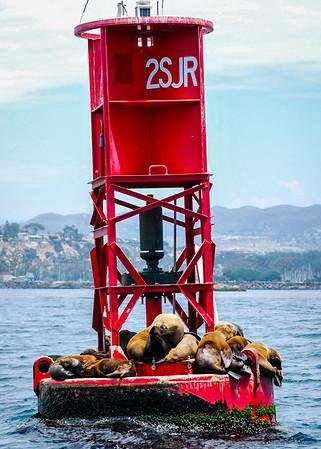 Bouy Seals