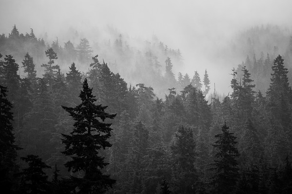 Spring storms stuck in the trees, Whistler BC
