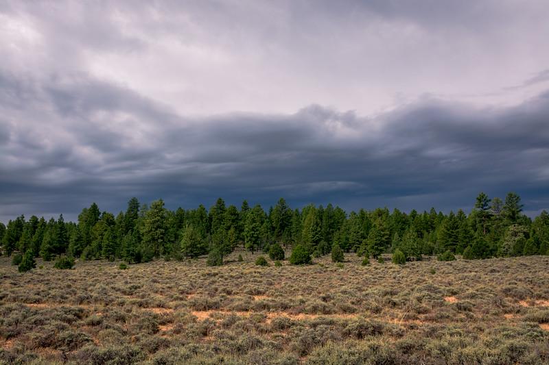 Dixie National Forest, Utah