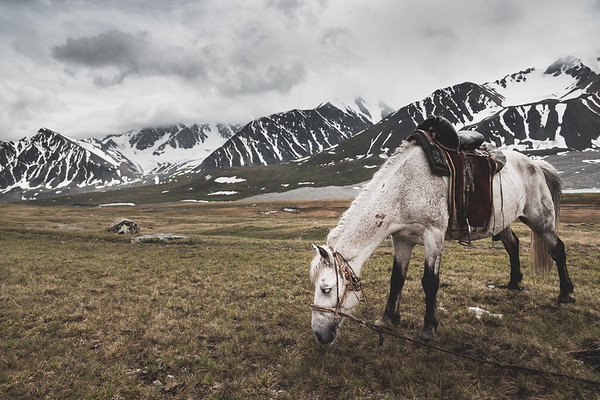 White Horse and the Altai Tavan Bogd