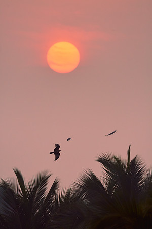 Bombay sunset