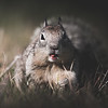 Hungry Squirrel