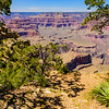 Grand Canyon Through the Trees