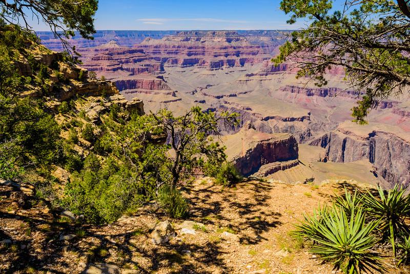 Grand Canyon Through the Trees