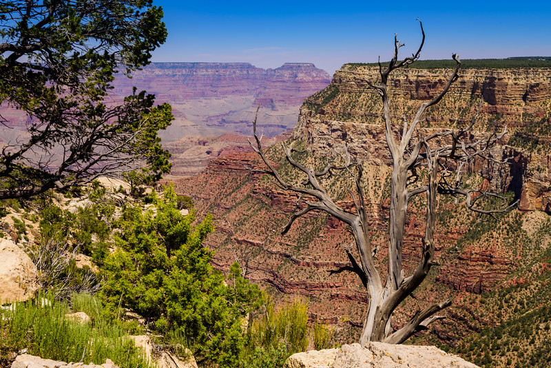 Grand Canyon with Foreground