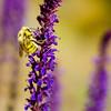 It's a Bee!