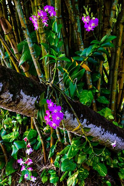 Wild Orchids in the Allerton Gardens