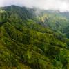 The Mountain Forest of Kaua'i
