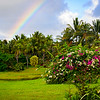 Wild Chicken on Kaua'i with Rainbow