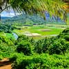 Hanalei Wetlands Under Palm