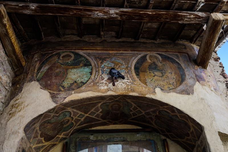 Assisi Pigeon