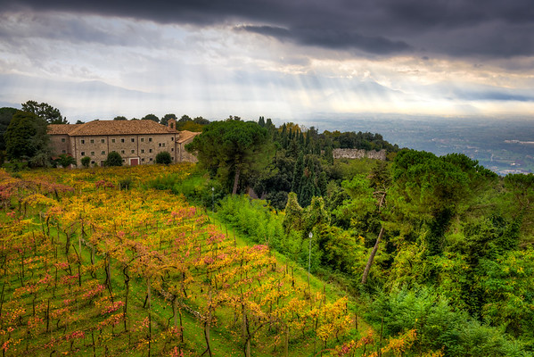 The vineyards on Monte Cassino, just outside the abbey
