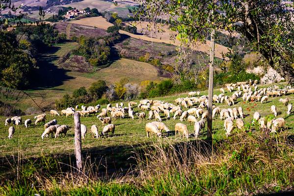 A hillside full of sheep