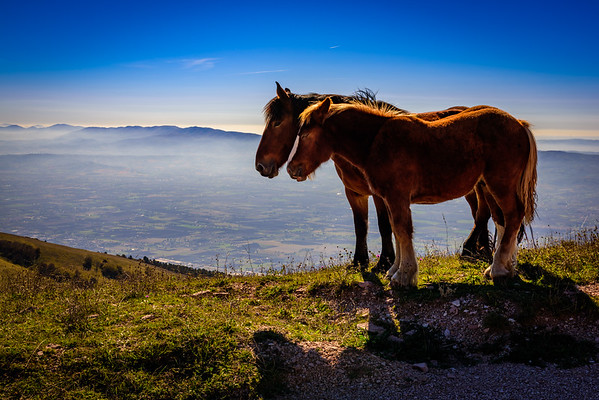 Two of the horses (we think a mother and foal) on top of Monte Subasio