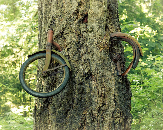 Vashon's Tree Bicycle - close-up