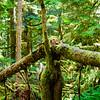 Oddly Fallen Tree