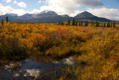 Montana Meadow