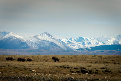 Blackfeet National Bison Reserve