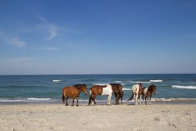 Day at the beach; Assateague 2016