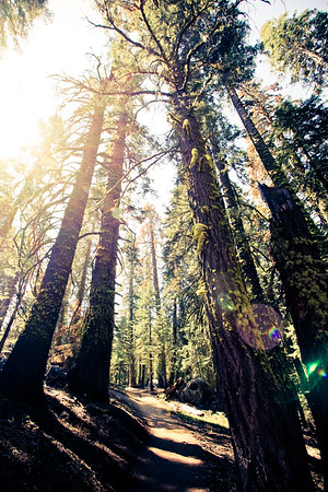 A Walk in the Woods; Yosemite National Park 2016