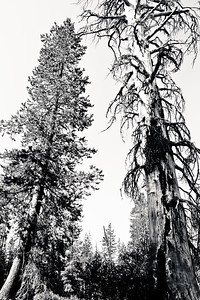 Twin Giants; Yosemite National Park 2016