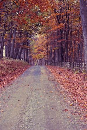 Fall Road; Chrysalis Winery 2013