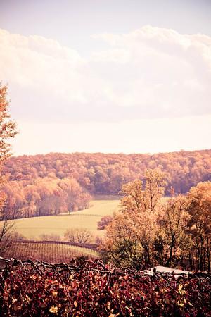Virginia Fall; Chrysalis Winery 2013