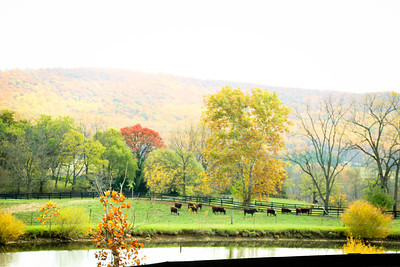Golden Pasture; Chrysalis Winery 2013