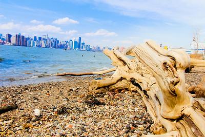 Brooklyn stump; Brooklyn 2014
