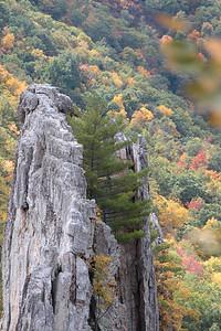 Mountain Tree; Seneca Rocks 2014